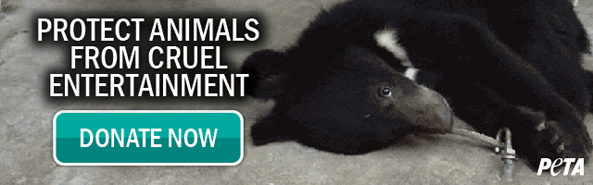 Foundation to Support Animal Protection Circus Email Header