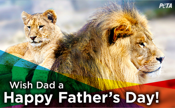 Foundation to Support Animal Protection Father's Day Email Graphic
