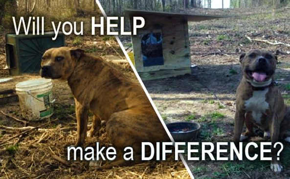 Foundation to Support Animal Protection Summer Doghouse Email Graphic