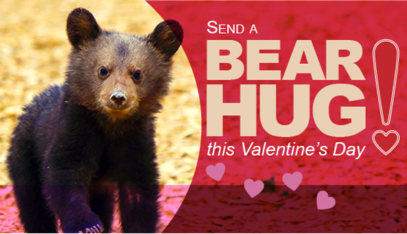Foundation to Support Animal Protection Valentine's Day Email Graphic